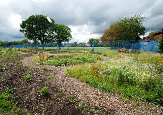 wildlife garden and growing space at haveley hey primary school in manchester