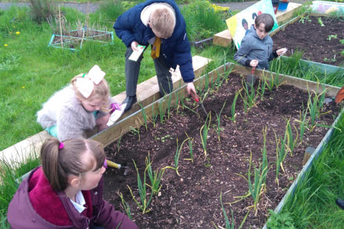 children planting in raised bed as part of ecotherapy project in rochdale