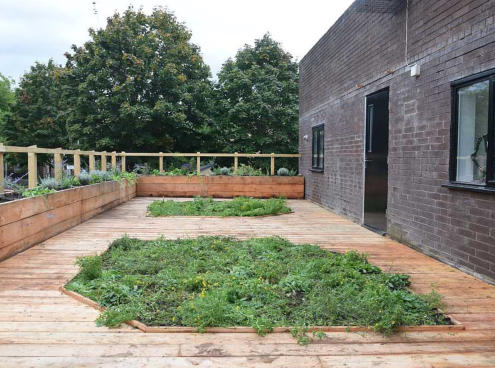 green roof with raised beds and wildflowers at the boiler house, moss side, manchester